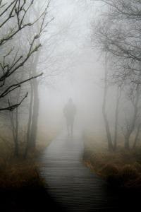 fog-267978_1280